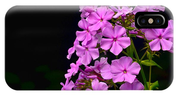 Flower Study 2 IPhone Case
