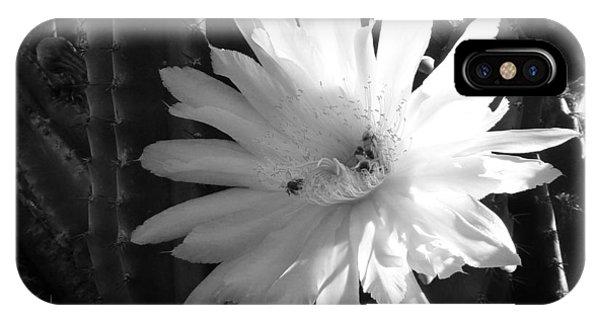 Flowering Cactus 1 Bw IPhone Case