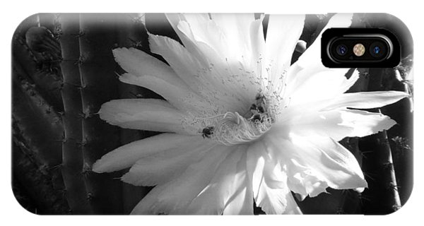 Flowering Cactus 1 Bw IPhone Case