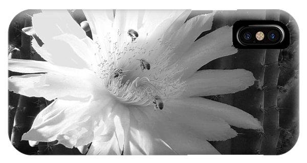 Flowering Cactus 5 Bw IPhone Case
