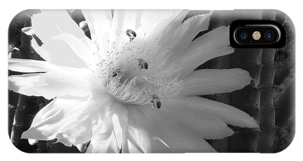 Flowering Cactus 5 Bw IPhone Case