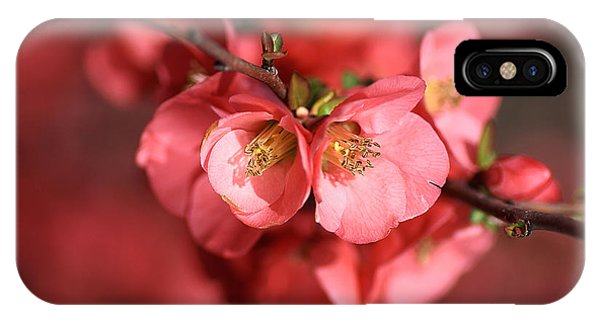 Flowering Quince IPhone Case
