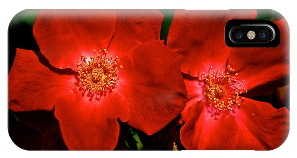 Flowering Reds Phone Case by Kathi Isserman