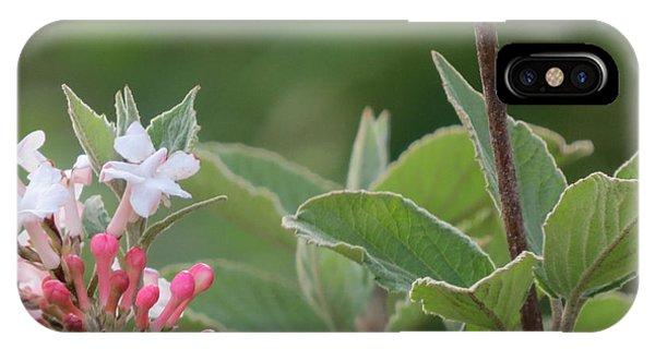 Flowering Shrub 1 IPhone Case