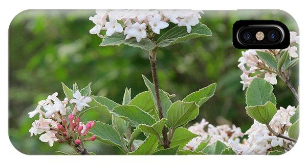 Flowering Shrub 2 IPhone Case
