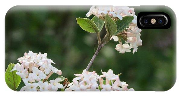 Flowering Shrub 3 IPhone Case
