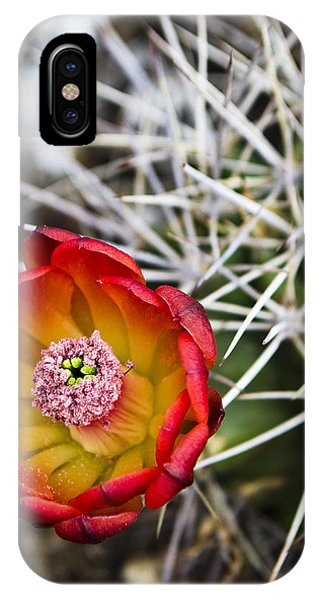 Blooming Texas Cactus IPhone Case