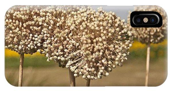 Petals iPhone Case - #flowers #flower #tagsforlikes #petal by Georgia Fowler