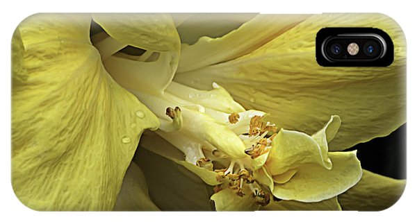 Flowing Petals Of The Chinese Hibiscus IPhone Case