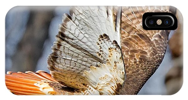 Red Tail Hawk iPhone Case - Fly Away by Bill Wakeley