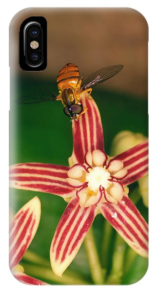 Pollination iPhone Case - Fly Pollinating Hoya Flower by Dr Morley Read/science Photo Library