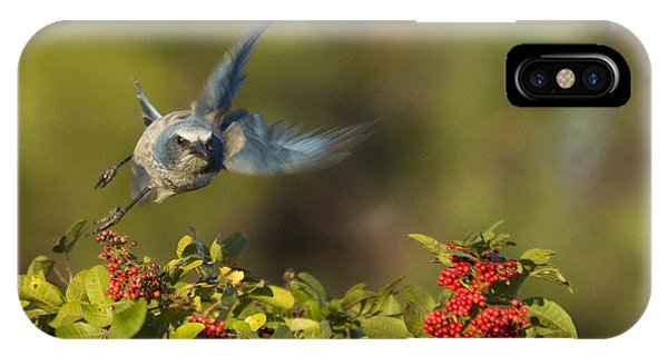 Flying Florida Scrub Jay Photo IPhone Case