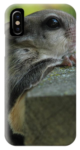 Flying Squirrel IPhone Case
