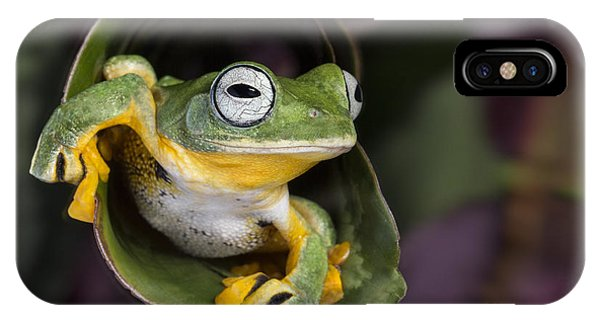 Flying Tree Frog IPhone Case