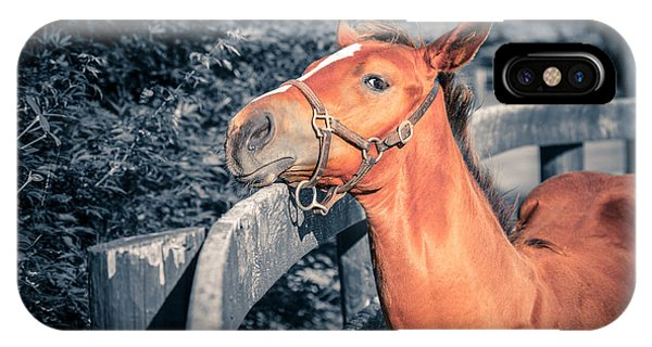 Foal By The Fence IPhone Case