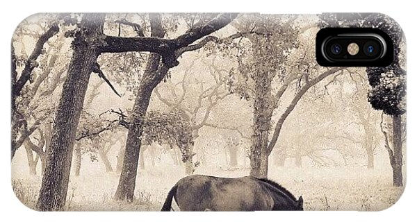 Tree iPhone Case - Foggy Field by CML Brown