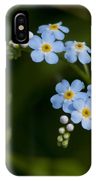 Forget-me-not Cascade IPhone Case