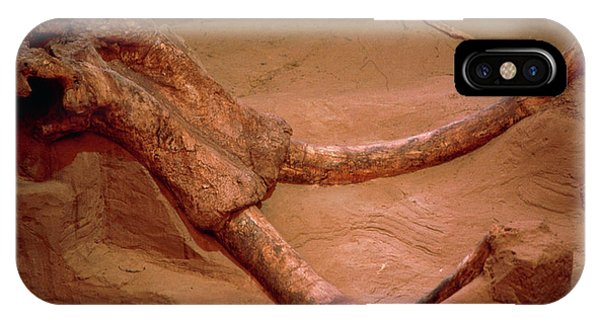 Mammoth Hot Springs iPhone Case - Fossil Mammoth Skull by Peter Menzel/science Photo Library