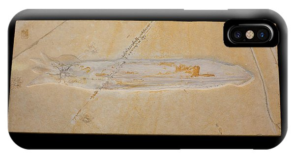 Squid iPhone Case - Fossil Squid by Science Stock Photography