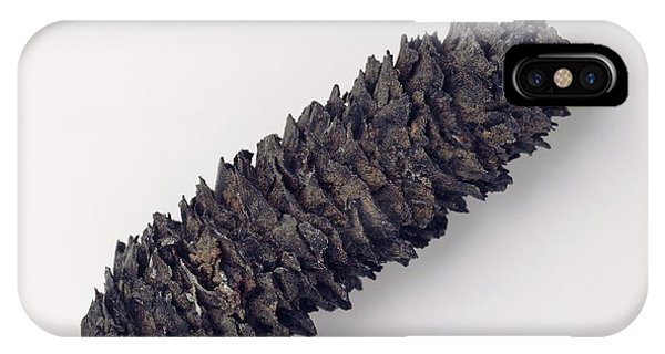 Spruce iPhone Case - Fossilised European Spruce Cone by Natural History Museum, London/science Photo Library