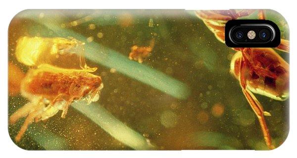 Fossilised Flea In Amber Phone Case by K. H. Kjeldsen/science Photo Library
