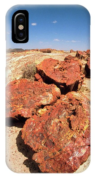Fossilised Trees In Petrified Forest National Park Phone Case by Tony Craddock/science Photo Library
