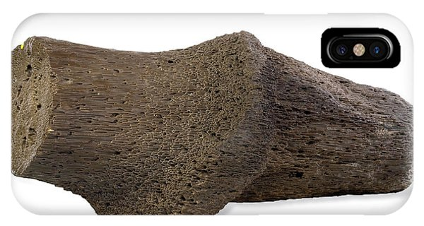 North London iPhone Case - Fossilised Wood by Natural History Museum, London/science Photo Library