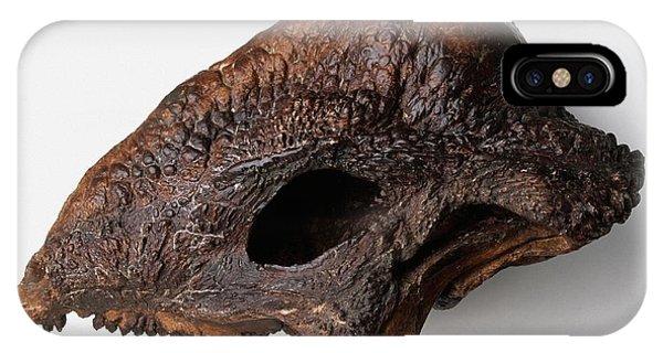 Fossilized Skull Roof Of Stegoceras Phone Case by Dorling Kindersley/uig