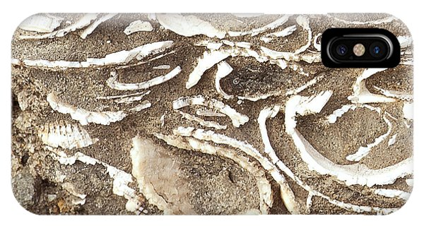 Fossils Layered In Sand And Rock Phone Case by Artist and Photographer Laura Wrede