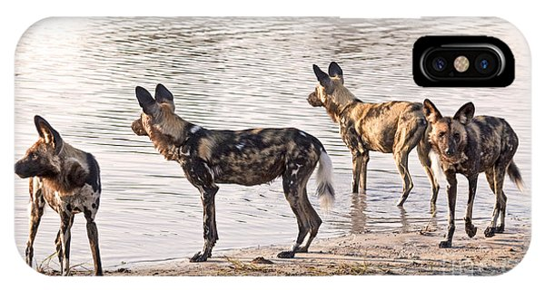Four Alert African Wild Dogs IPhone Case