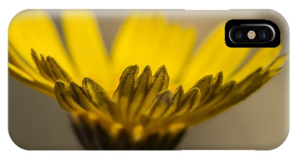 Four-nerve Daisy IPhone Case
