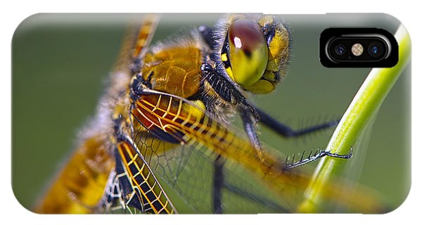 Four Spotted Chaser IPhone Case