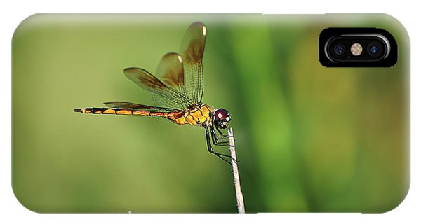 Wakulla iPhone Case - Four-spotted Pennant by Rich Leighton