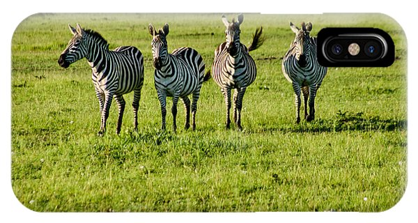 Four Zebras IPhone Case