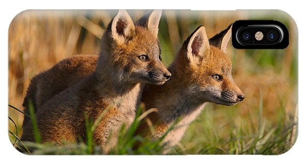 Fox Cubs At Sunrise IPhone Case