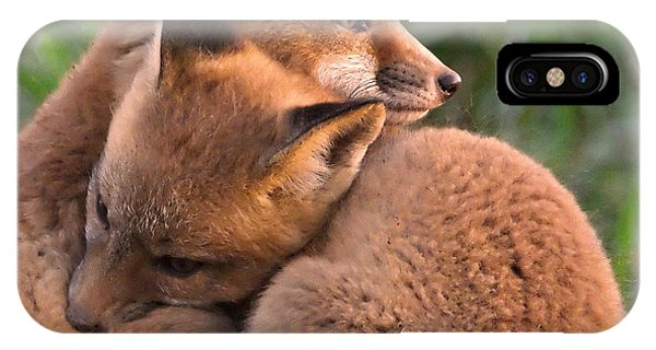 Fox Cubs Cuddle IPhone Case