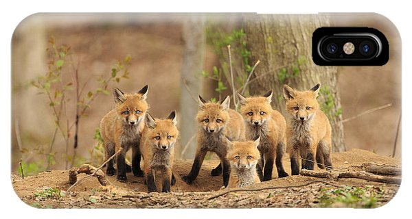 Fox Family Portrait IPhone Case