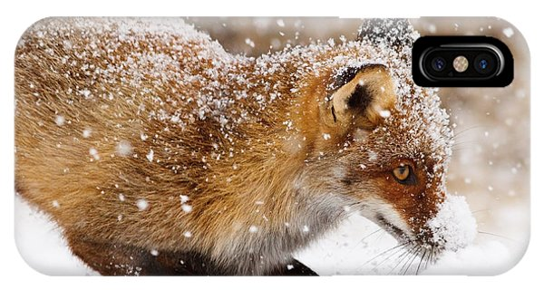 Eye Ball iPhone Case - Fox First Snow by Roeselien Raimond