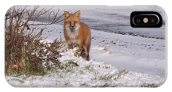 Fox In My Yard IPhone Case