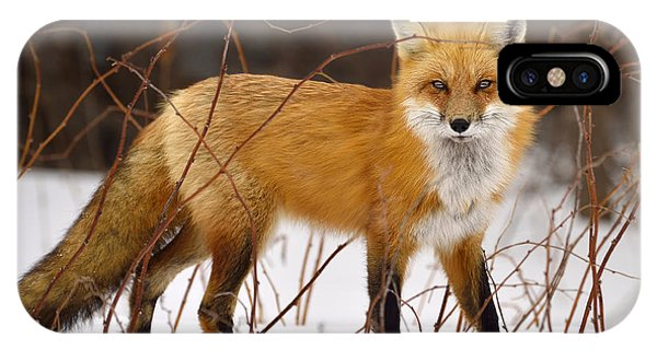 Fox In Winter IPhone Case