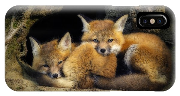 Best Friends - Fox Kits At Rest IPhone Case