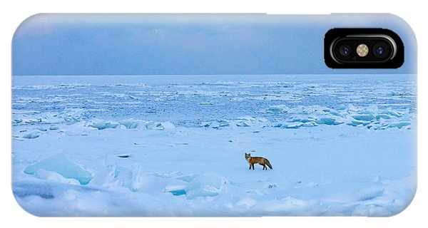 Fox Of The North Country Iv IPhone Case