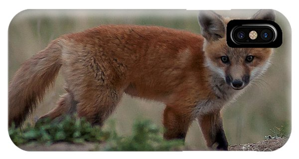 Fox Pup IPhone Case