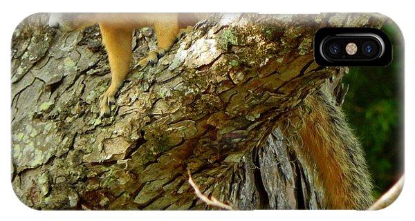 Fox Squirrel IIi Phone Case by Lynn Griffin