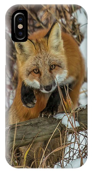 Fox Trot IPhone Case