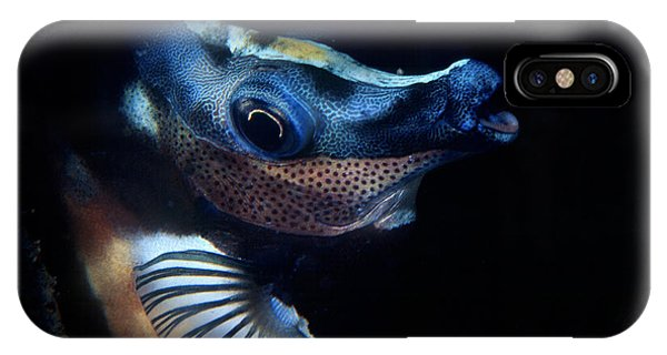Foxface Rabbitfish IPhone Case