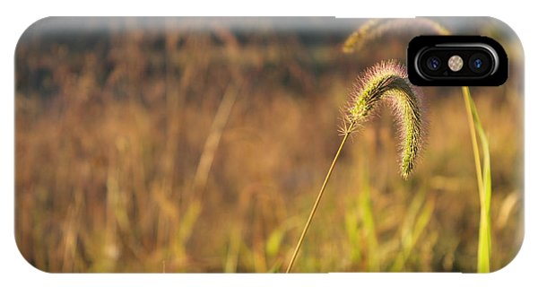 Foxtail Grass - Indian Summer Phone Case by Annette Gendler