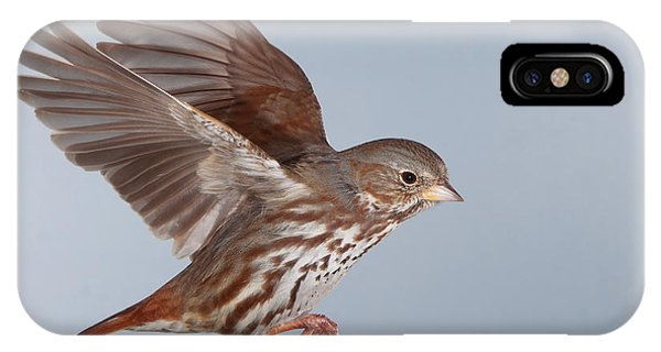 Foxy The Sparrow Phone Case by Gerry Sibell