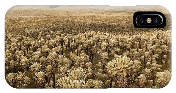 Colombia iPhone Case - Frailejones', Espeletia Pycnophylla by Pete Oxford