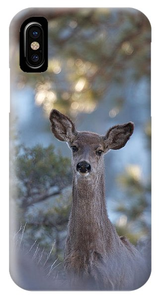 Framed Deer Head And Shoulders IPhone Case